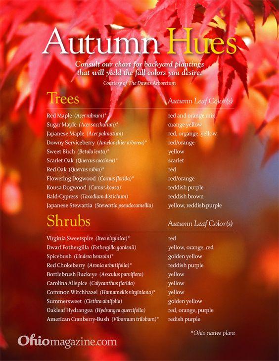 Autumn Hues Chart