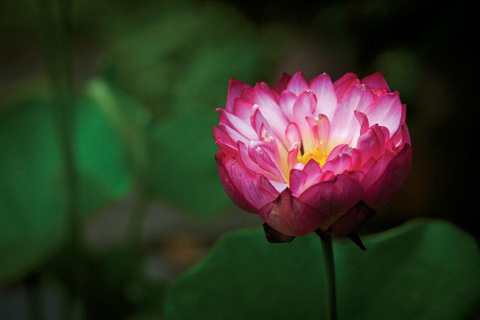 havill-garden-flower-detail