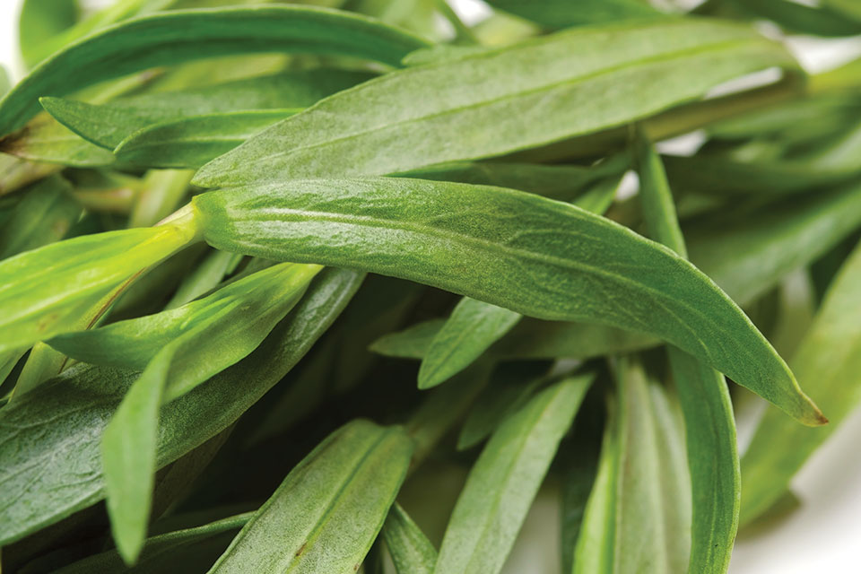 Tarragon Plant (photo by Thinkstock)