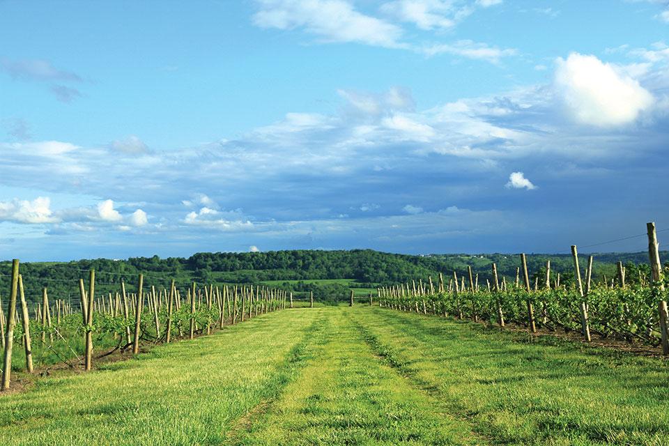 La Vigna Landscape