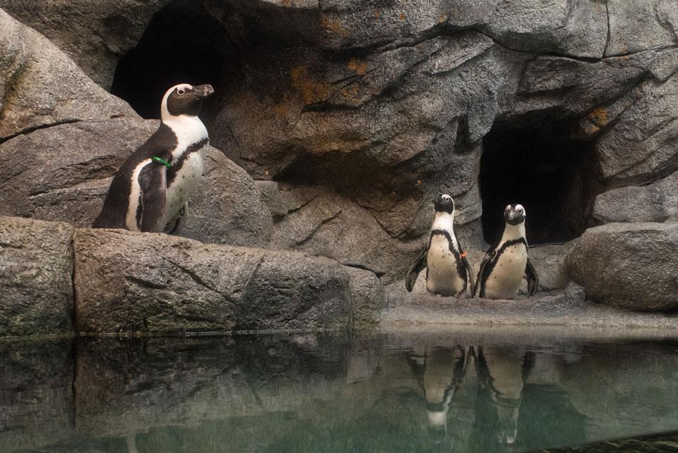 Zoo Penguin Shores