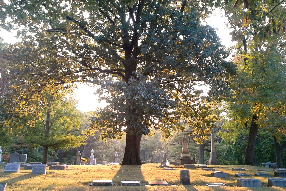 Woodland Cemetery_tree