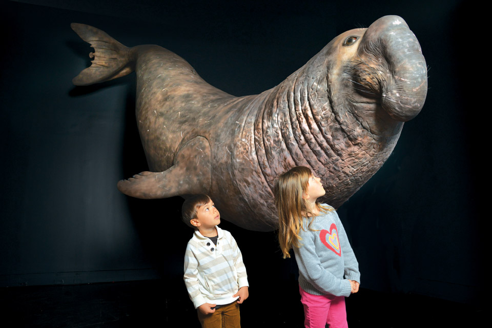 Elephant-seal-model_at-cleveland-museum-of-natural-history