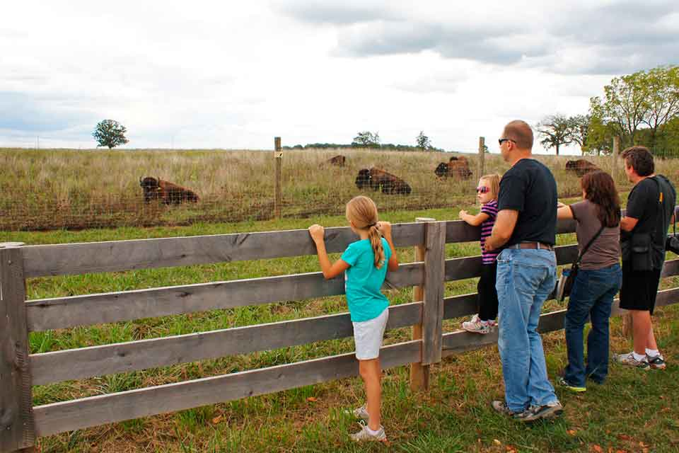 Bison Hike at Battelle Darby Creek Metro Park