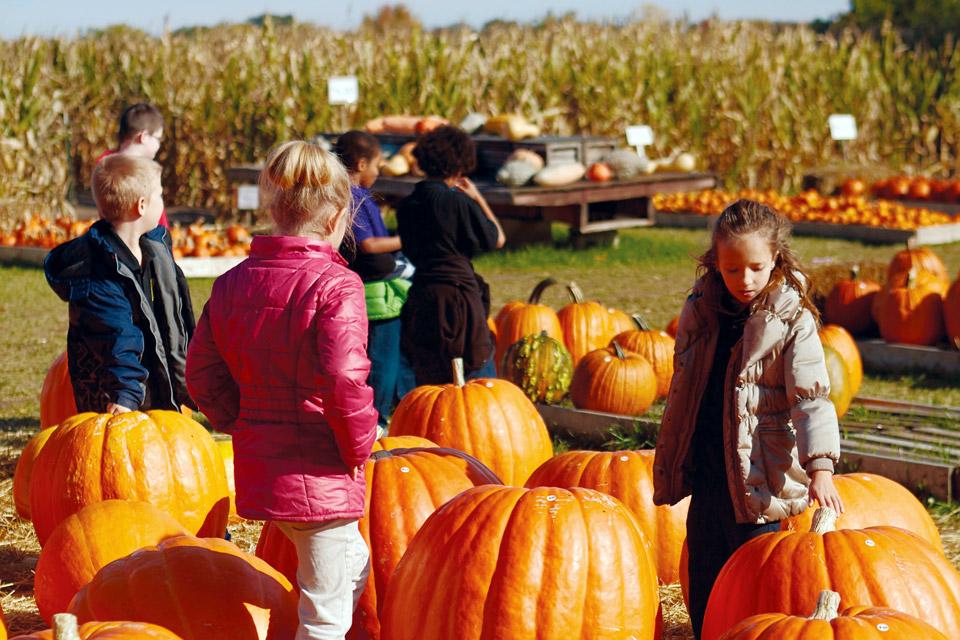 Fleitz Pumpkin Farm