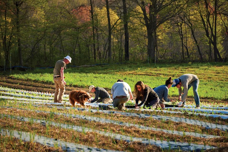 Crew hand planting crops