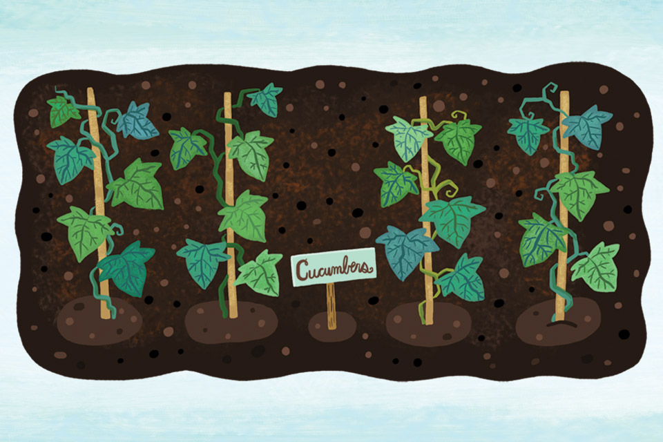 Raised bed planting tips