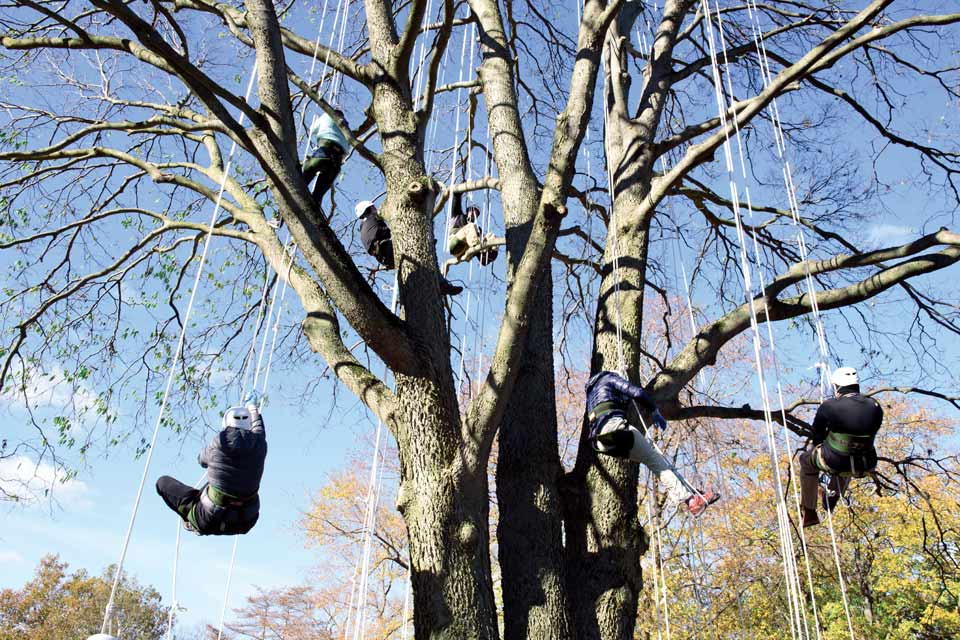Tree-climbing lesson at Toledo Metroparks