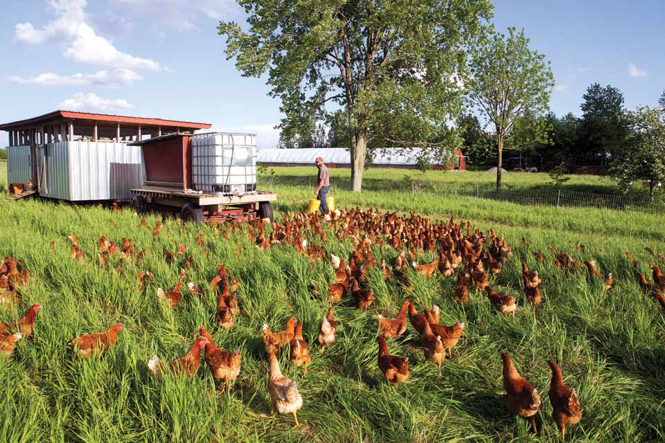 feeding-the-chickens_Weber_Ranch