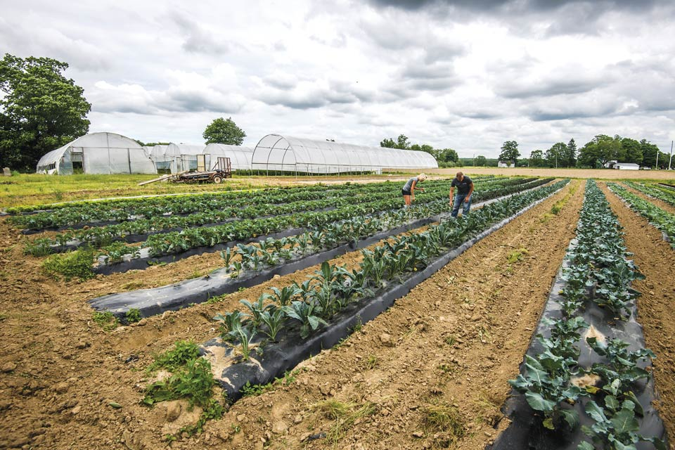 Produce in the fields at Red Basket Farm