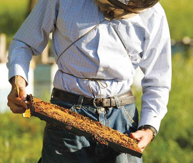 Isaac Barnes working at Honeyrun Farm