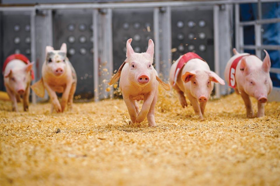 Ohio State Fair pig races