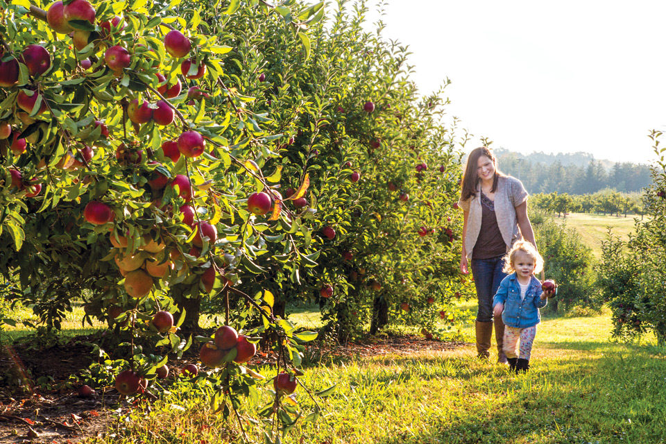 Brant's-apple-orchard