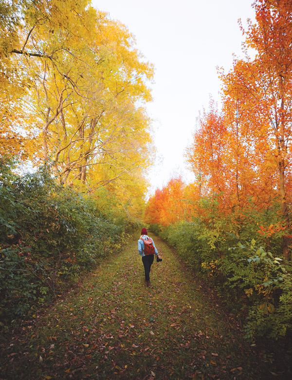 Walnut Woods Metropark (photo by Dylan Spitz)