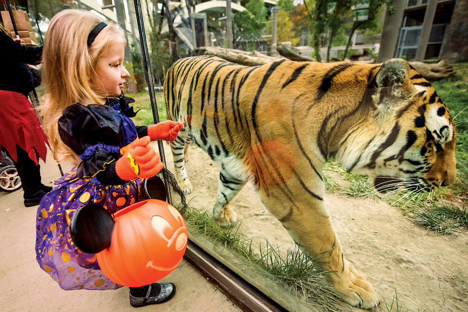Cleveland Metroparks Boo at the Zoo (photo courtesy of Cleveland Metroparks)