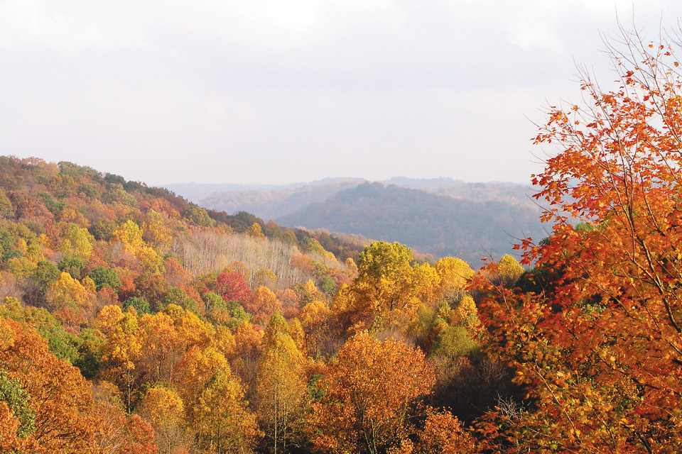 Wayne National Forest (photo by Bruce Wunderlich)