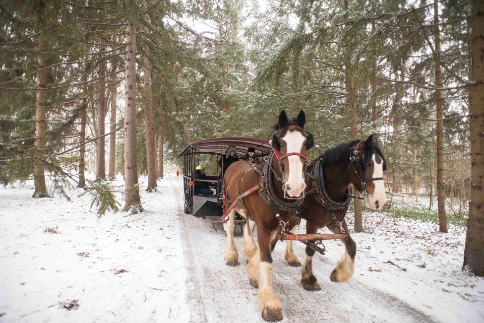 Sleigh Rides at Spiegel Grove (photo by Kristina Smith)