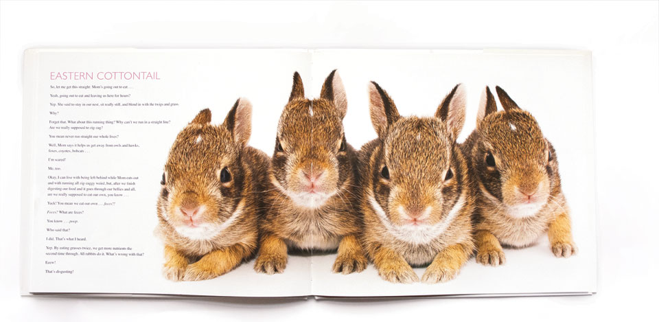 """David Fitzsimmon's """"Curious Critters"""" Eastern Cottontail book"""