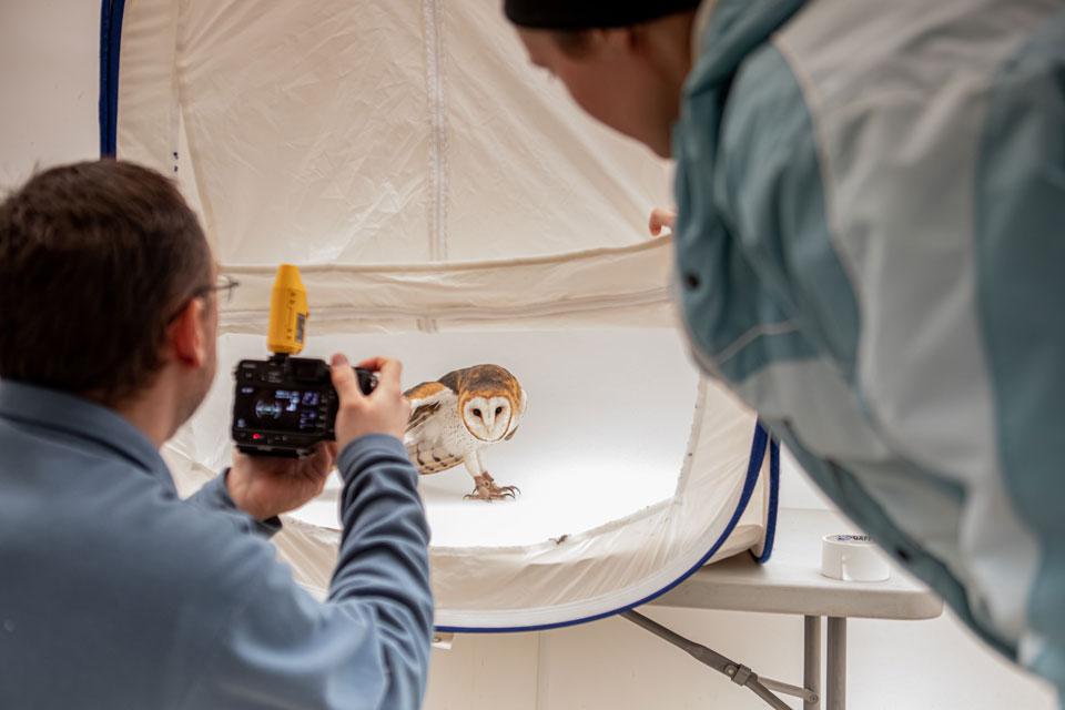 David Fitzsimmons photographing a barn owl