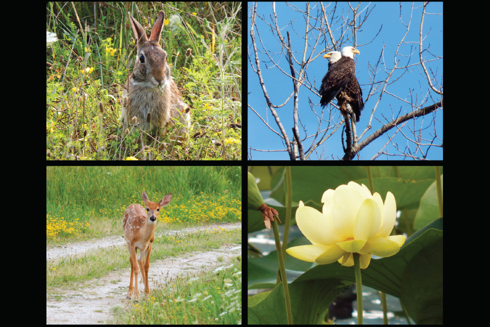 Ottawa National Wildlife Refuge flora and fauna (photos by Kristina Smith)