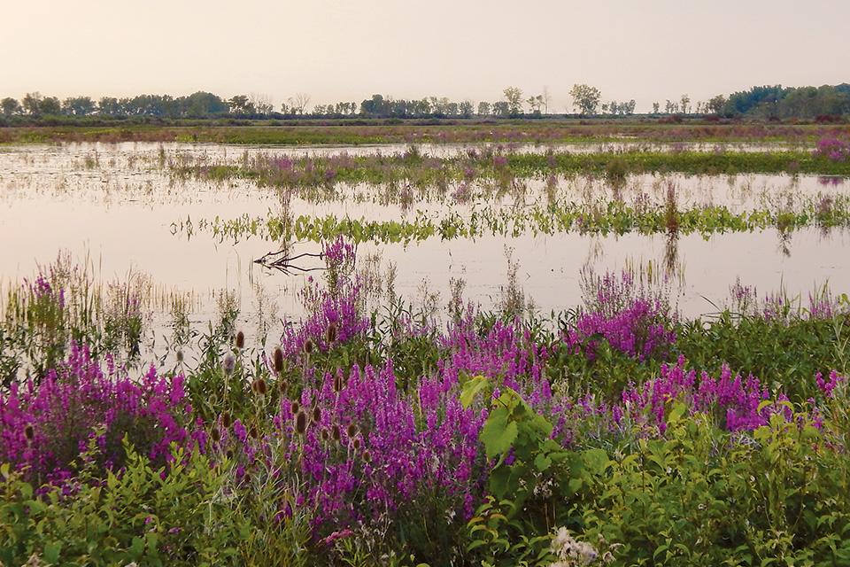 Ottawa National Wildlife Refuge marsh