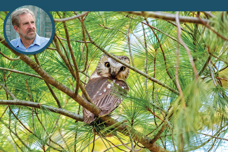 Owl at Killdeer Plains (photo by Tom Ramsey) and Ken Kaufmann (inset)