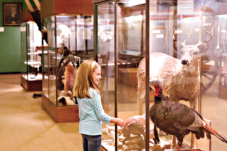 Girl looking at taxidermy in museum (photo courtesy of Marietta-Washington Convention & Visitors Bureau)