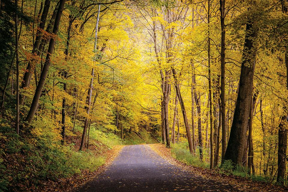 Beaver Creek State Park path (photo by Darren Walker)