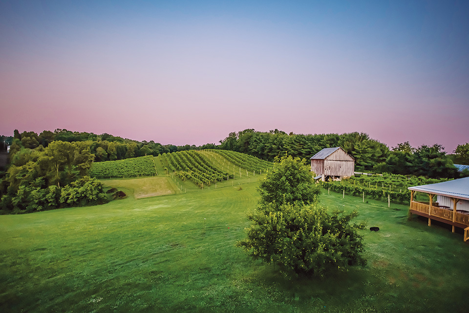 Le Petit Chevalier Vineyards and Farm Winery field (photo courtesy of Le Petit Chevalier Vineyards and Farm Winery)